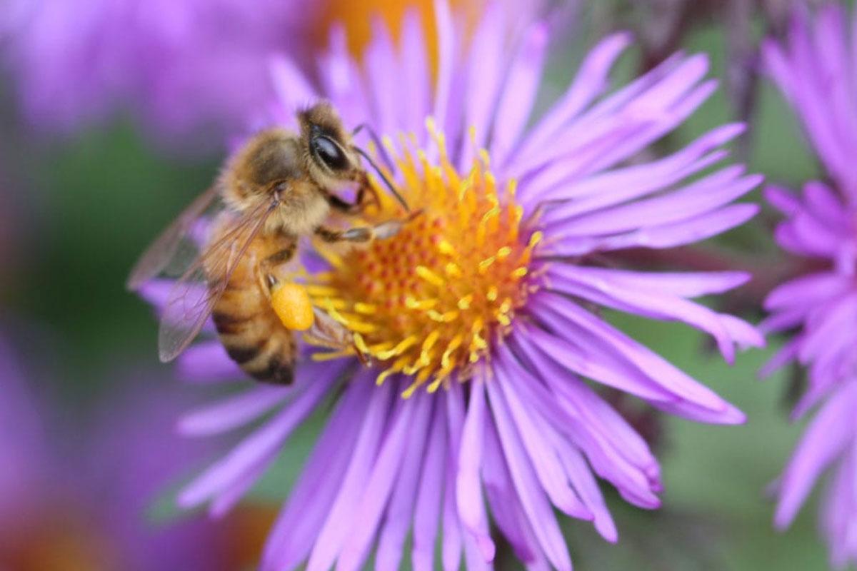 pollinator garden 122521